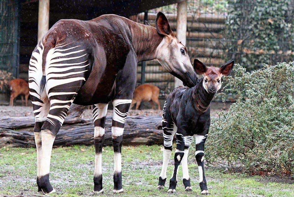 Atrações do Jardim Zoológico de Berlim