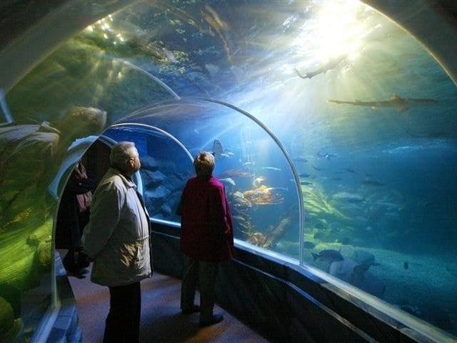 Ingressos para o AquaDom e Sea Life em Berlim
