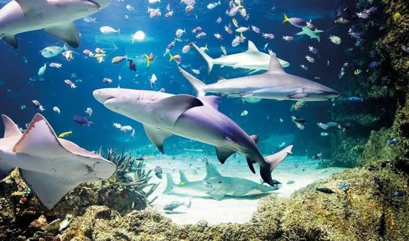 Tanque de tubarões no Sea Life Munich