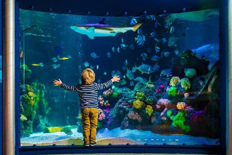 Aquários do Sea Life Munich