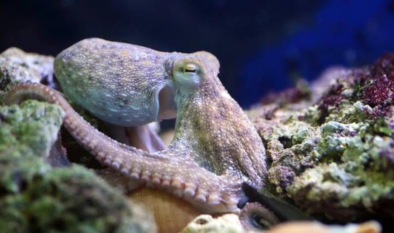 Diferentes espécieis no Sea Life Munich