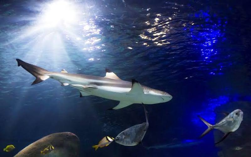 Tanques de tubarões no Sea Life Munich